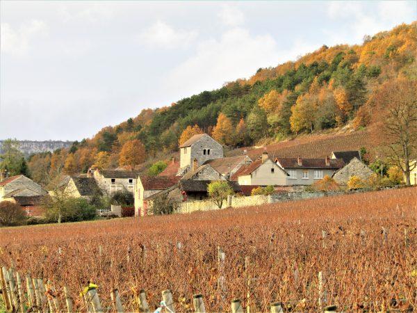 Instituée en 1947, l'appellation Saint-Romain, située en Côte de Beaune, produit des vins blancs et rouges sur environ 100 hectares. Les principaux climats sont Poillange, La Perrière, Sous le Château, Sous la Velle, Sous Roches, Le Jarron (Photo FC)