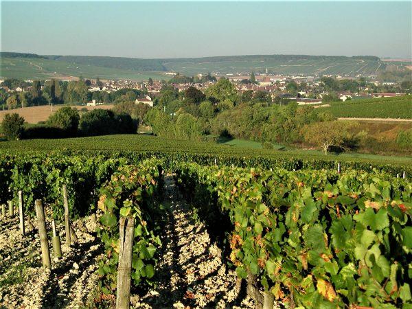L'appellation Chablis Grand Cru compte 7 Climats : Blanchot, Bougros, Les Clos, Grenouilles, Preuses, Valmur, Vaudésir. Elle est produite essentiellement sur le village de Chablis, mais aussi sur Fyé et Poinchy (Drouhin)