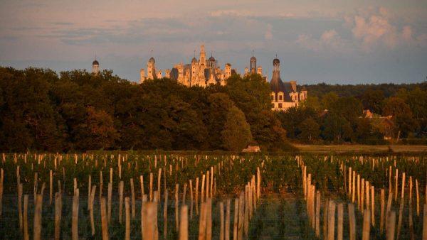 Le vignoble de Chambord et ses premières cuvées