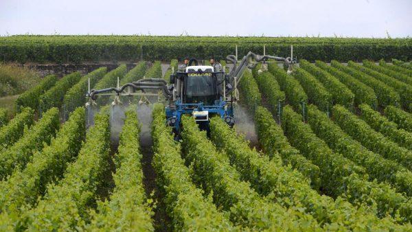 Champagne: 4 grands secteurs et 7 cépages autorisés. A quand les nouvelles variétés résistantes?